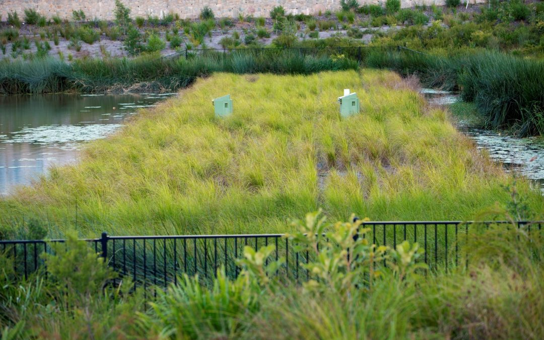 Floating Wetlands Provide Added Surprise For Developers